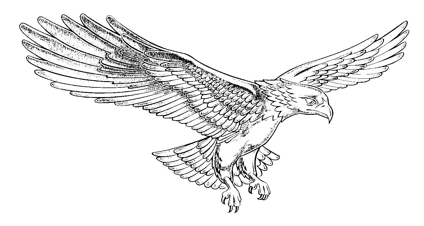 how to draw an eagle flying with its wings out